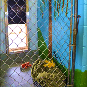 A dog kennel with access to the outdoor dog run